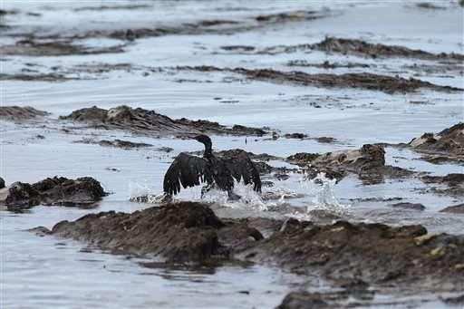 California oil spill harder to clean up in choppy waters