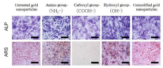 Development of gold nanoparticles that control osteogenic differentiation of stem cells