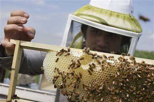 EPA plans temporary pesticide restrictions while bees feed