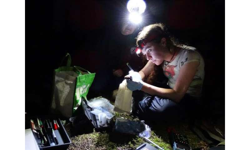Researcher investigates the mysteries of Washington's San Juan Islands bats