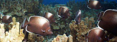 Researchers study marine ecological changes at Easter Island