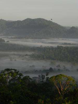 Scientists question tropical protected areas' role under climate change