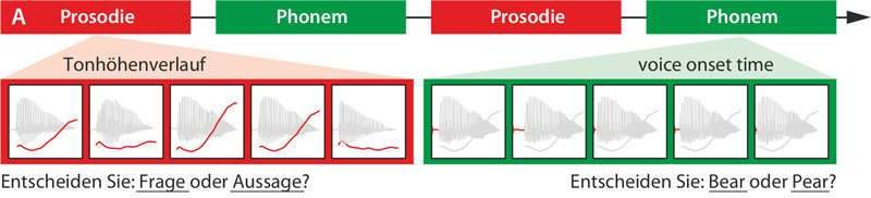 Scientists discover neural communication pathways for prosody