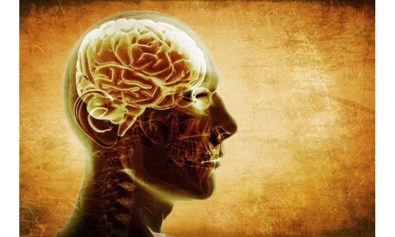Researchers find the organization of the human brain to be nearly ideal