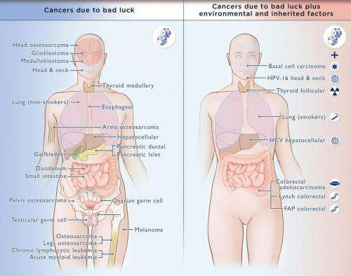 'Bad luck' of random mutations plays predominant role in cancer, study shows