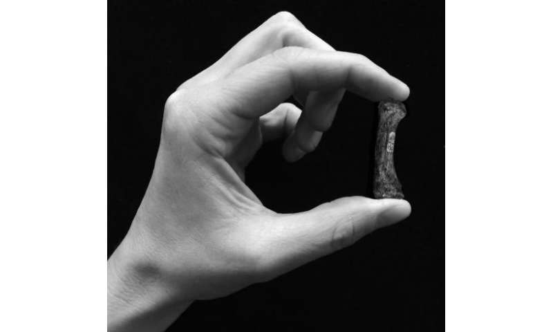 Early human ancestors used their hands like modern humans