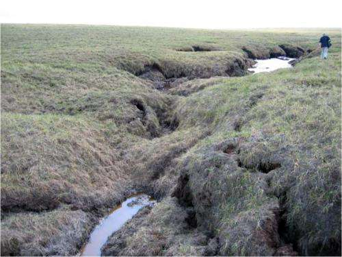 Characterizing permafrost microbes in a changing climate