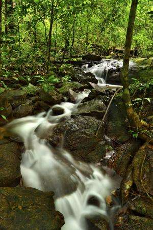 Indigenous peoples take action to conserve nearly half of Suriname