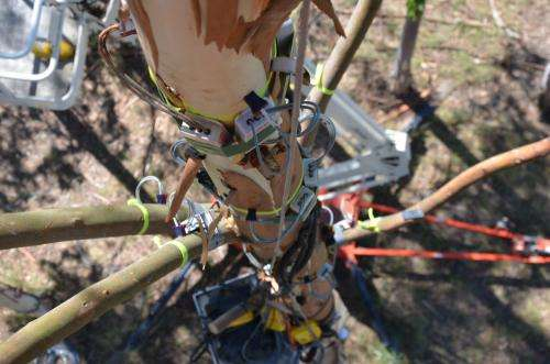 Measuring the pulse of trees