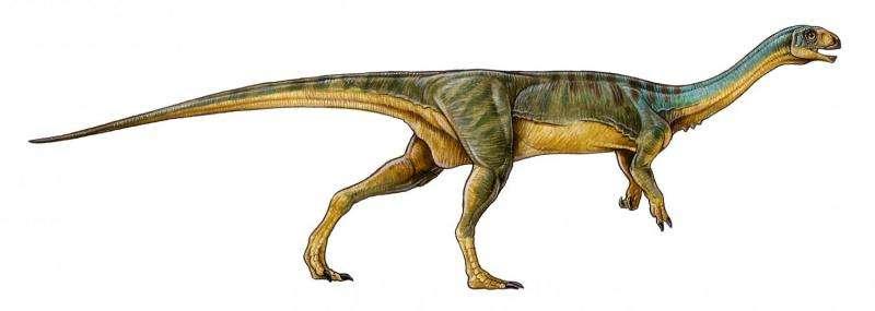 Bizarre 'platypus' dinosaur discovered