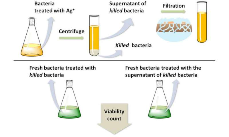 'Zombie' bacteria found able to kill other bacteria