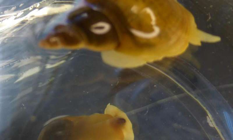 On the trail of the clever snail: Animals, like humans, excel at some tasks but not others