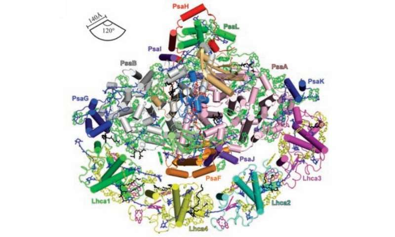 Researchers capture higher resolution imagery of photosynthetic large light harvesting complex I
