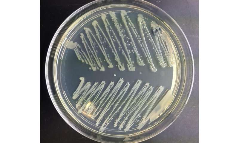 Study points towards new strategies for stopping the spread of Staph and MRSA