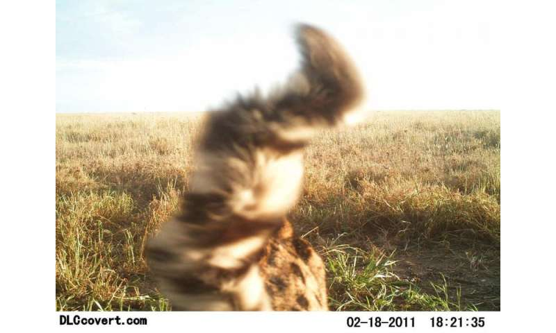 How citizen scientists classified millions of Serengeti photos from home