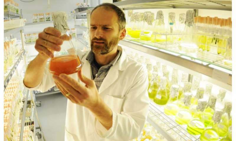 Scientists reveal algal oil potential as fuel for the future