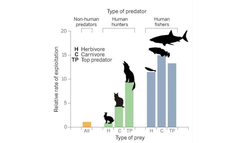 The unique ecology of human predators