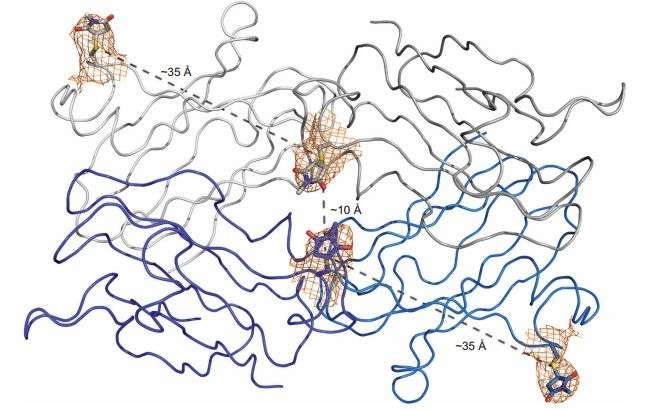 Study of PEGylated model protein reveals porous structure based on PEG size