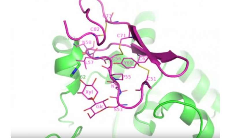 Reaction snapshots of a notch-modifying enzyme provide a basis for drug design