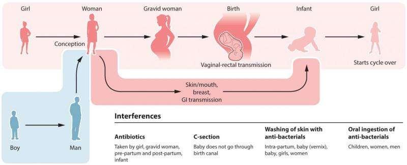 Four gut bacteria decrease asthma risk in infants