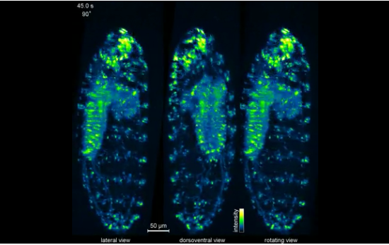 New microscope helps scientists see the big picture