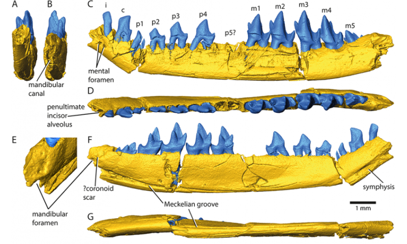 Isle of Skye fossil makes three species one