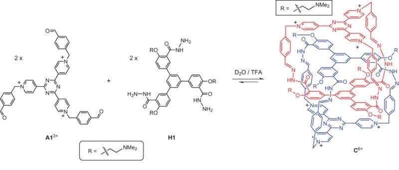 Organic catenane self-assembles in acidic water