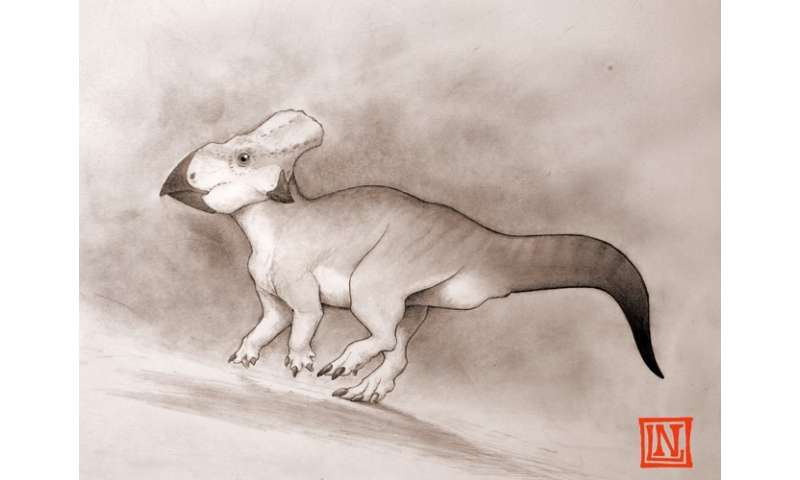 How I found a small, weird-looking horned dinosaur from eastern USA