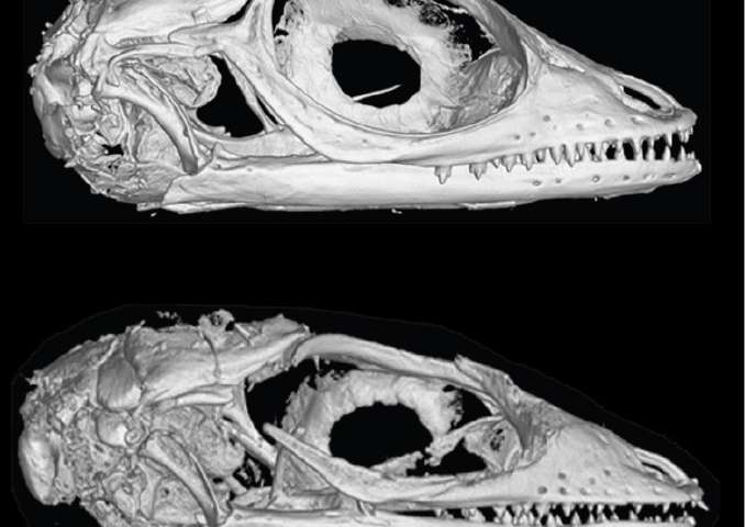 Ancient fossils reveal remarkable stability of Caribbean lizard communities