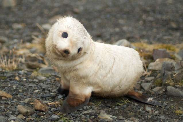 Antarctica's wildlife in a changing climate
