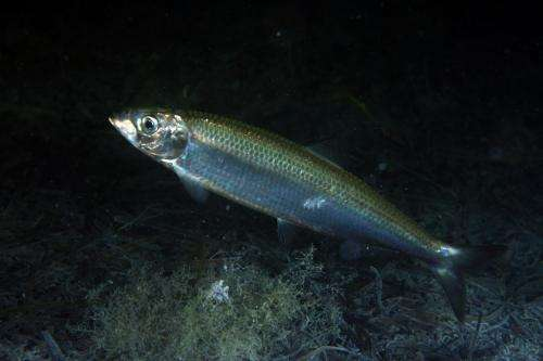 Climate change redistributes fish species at high latitudes