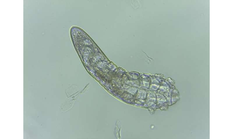 Scientists say face mites evolved alongside humans since the dawn of human origins