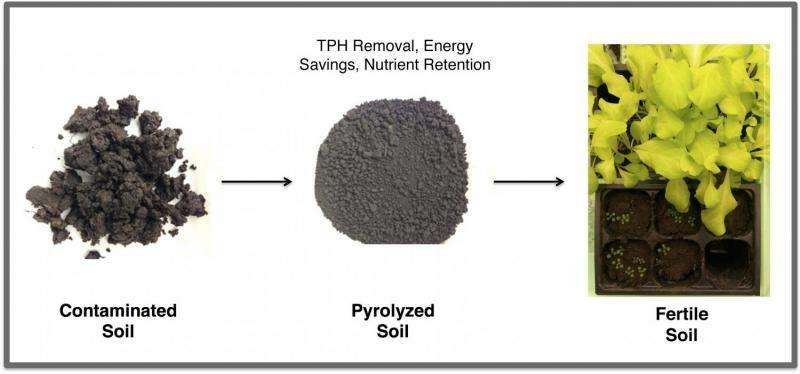 Scientists turn oily soil into fertile ground