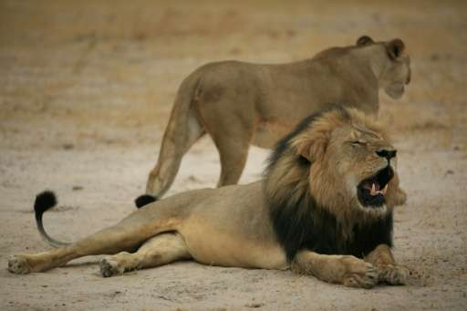 This handout picture taken on October 21, 2012 and released on July 28, 2015 by the Zimbabwe National Parks agency shows a much-