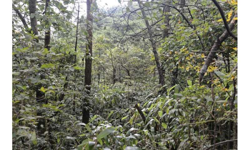 Study finds there is less knowledge about global species diversity than previously assumed