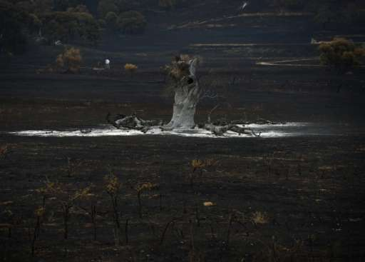 "A burnt tree sits amongst a scorched paddock as the ""Valley Fire"" continues the town of Middletown, California on Sept"