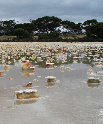 Acid saline groundwaters and lakes of southern Western Australia