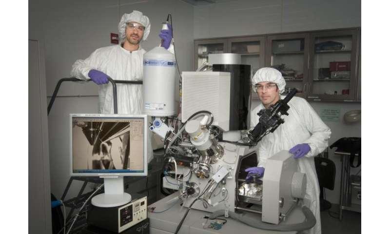 Adapting nanoscience imaging tools to study ants' heat-deflecting adaptations