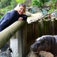 A helping hand for pygmy hippos