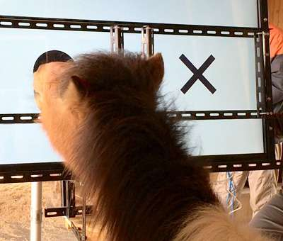 A horse's eye view: does a pony see what we see?