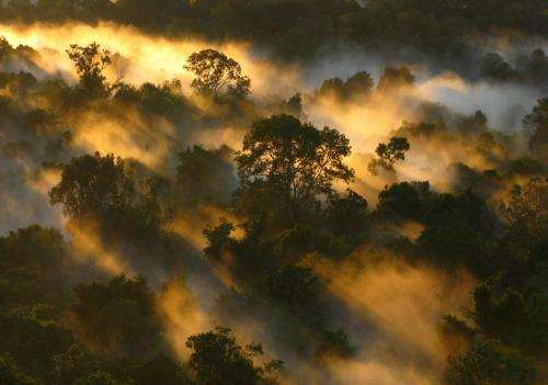 Amazon's carbon uptake declines as trees die faster