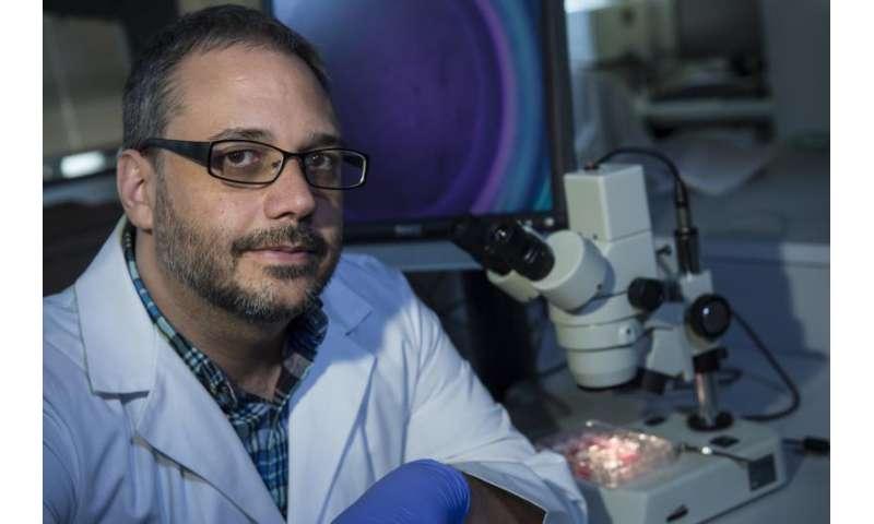 Amniotic stem cells demonstrate healing potential