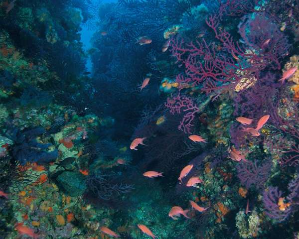 A moderate increase of oceanic acidification leads to a dramatic shift in benthic habitats