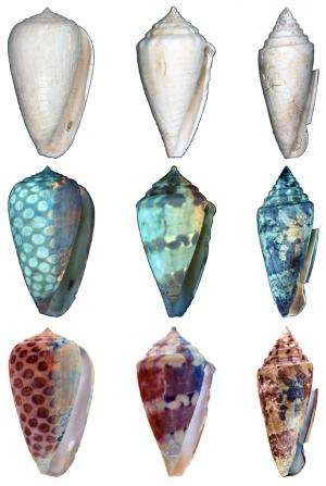 Ancient seashell coloration patterns revealed using ultraviolet light