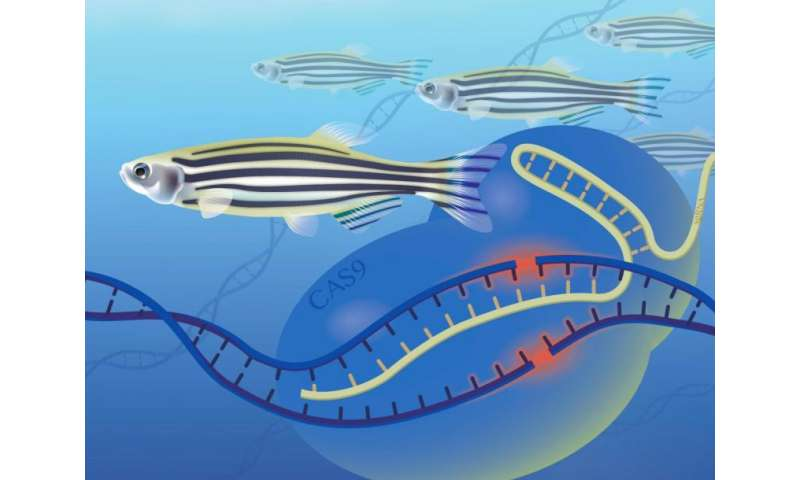 A new role for zebrafish: Larger scale gene function studies
