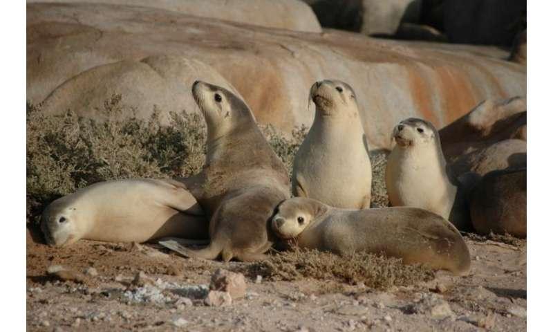Antibiotic resistance spreading to wildlife