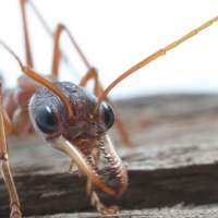 Ants colour vision may help march towards robot technology