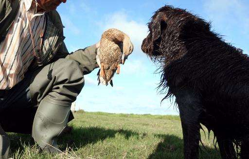 A petition for a referendum on curbing bird hunting garnered 44,000 signatures