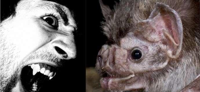 Are vampire bats nature's misunderstood monsters?