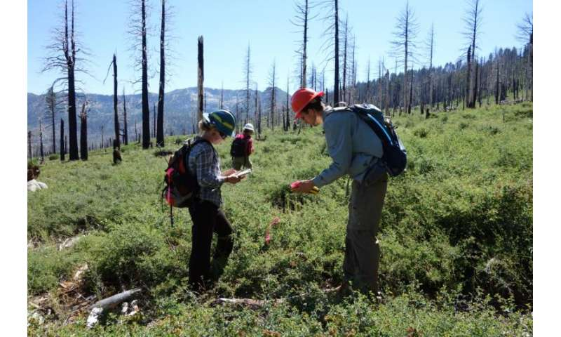 As California wildfires burn, southern plant species are shifting northward